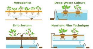 Jenis-jenis Sistem Hidroponik